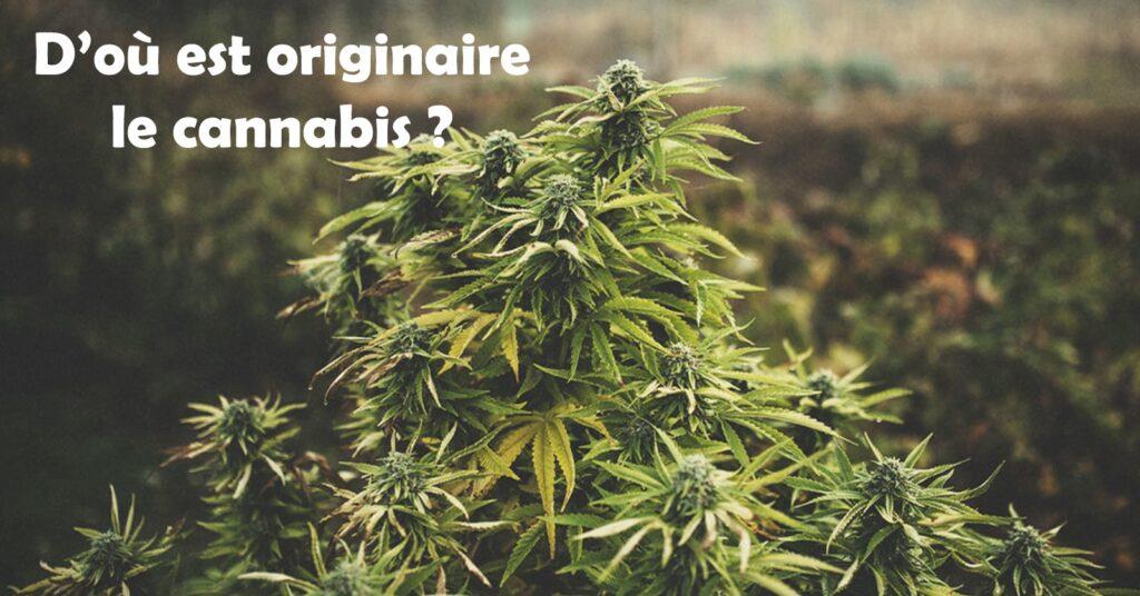 D'où est originaire le cannabis ?